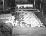 Oranges on a conveyor belt at a citrus packing plant near Lakeland, Florida